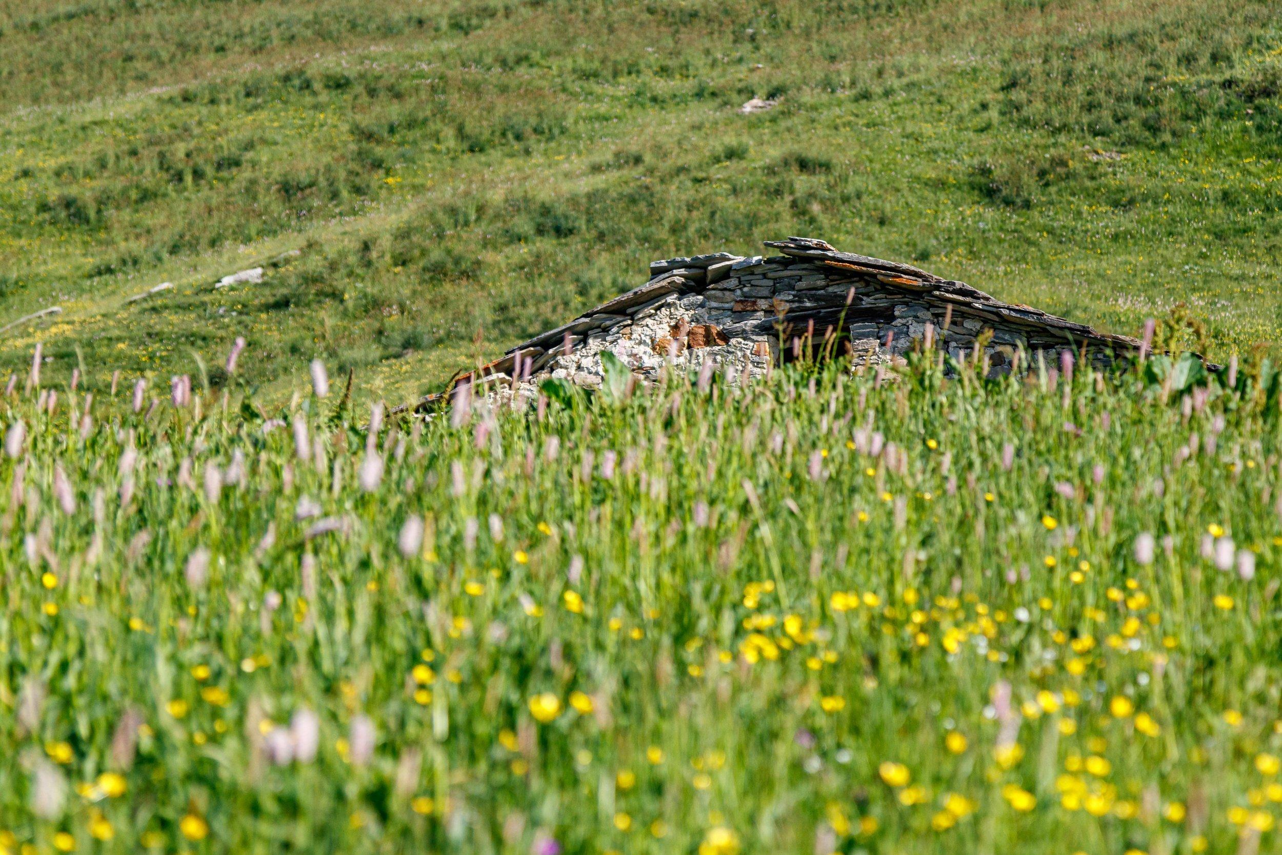 Alpeggio Valle Grana
